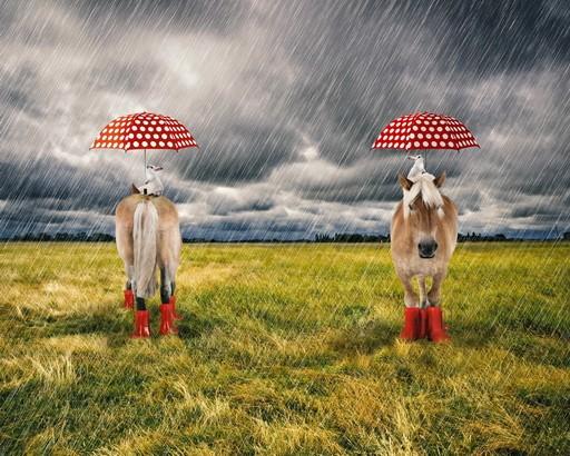 Stenzo Jersey-Panel Pferd im Regen