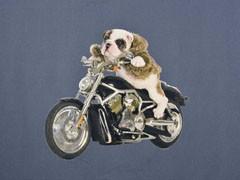 Stenzo Jersey-Panel Mops auf Motorrad