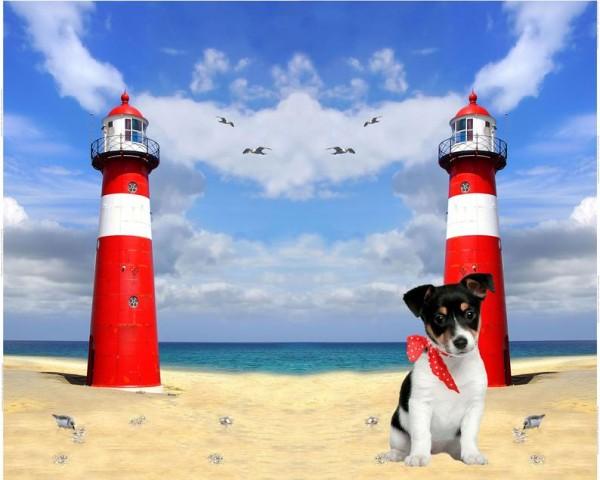 Stenzo Jersey-Panel Hund mit Leuchtturm